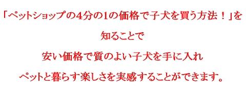 koinulogo1.jpg